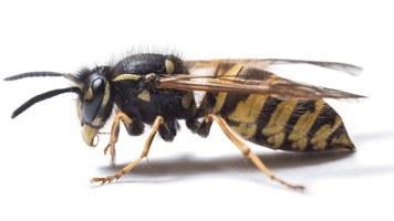 wasp-web.jpg